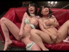 Japanese Young Bound Pets